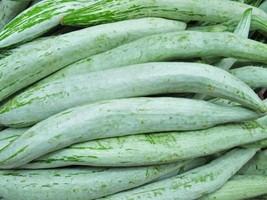 50 Snake gourd fresh Seeds Vegetable Food Planting Organic Non GMO Fast ... - $6.00