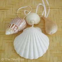 Seashell Christmas Ornaments Shell Natural Beach House Mermaid Nautical ... - $10.99