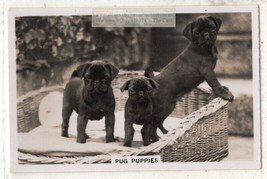 Pug Puppy Dog Canine Pet Animal 1930s Trade Ad Card - $5.84