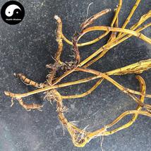 Huang Cao Shi Hu 黄草石斛, Herba Dendrobium Chrysanthum 200g - $19.99