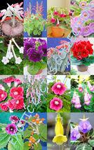 COLOR SINNINGIA MIX rare african violets fragrant garden flower seed 150 seeds - $26.00