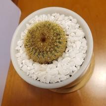 Golden Ball Cactus in Blue Ceramic Mandala Planter Pot, Parodia leninghausii  image 5