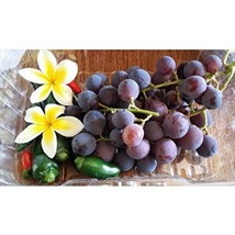Japan Kyoho Grapes Aromatic Fragrant Flavor 20 Seeds #EPT06 - $20.17