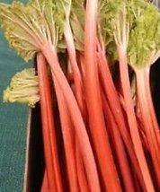 25 Victoria Rhubarb Pie Plant Fruit Vegetable Seeds Heirloom Perennial - $2.94