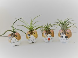 """Air Plant in Cat Planter 3"""", Kitty Ceramic Pot with Emotion Face"""