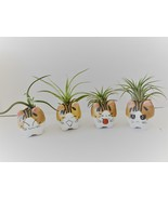 """Air Plant in Cat Planter 3"""", Kitty Ceramic Pot with Emotion Face - $12.99"""