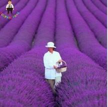200Pcs Lavender bonsai From French Provence Fragrant Organic Jardin Flower bonsa - $16.19