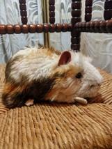 Steiff Ginny Guinea Pig 071911 2251/18 1990 Squeaker - $138.03
