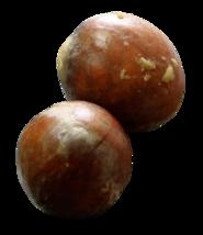 3 Organic Avocado Seeds, Hass image 1