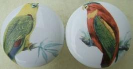 CABINET Knobs w/ 2 Parrots Parrot Tropical BIRD - $10.49