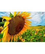 Sunny Flower - $39.99 - $64.99
