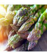 Jersey-Supreme  100 Live asparagus bare root plants -2yr-crowns - $69.25