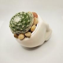 "Sempervivum Succulent in Ceramic Skull Planter 3.5"", Hens & Chicks Live Plant image 7"