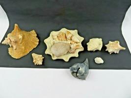Vintage lot of Florida shells sunshine beach deco - $40.00