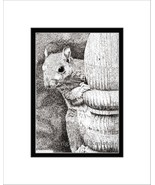 Squirrel Pen and Ink Print - $24.00