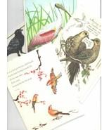 Lot of 4 Trader Joe's Birds Lovers  Blank Greeting Cards - $16.89