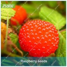 100Pcs Chinese Raspberry Fruit Trees Seeds Bonsai Chinese Herbal Medicine - $2.18