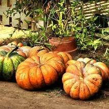 Pumpkin Cinderella Vegetable Seeds (Cucurbita maxima) 20+Seeds - $5.93+