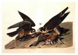 Audubon Great Footed Hawk Bird Art Print 7 in x 10 in, Matted to 11 in x 14 in - $9.99