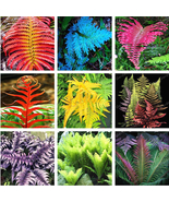 100PCS mixed seed Japanese Rare Creeper Boston fern plant Vines Climbing... - $6.42