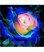 100Seeds/bag rare blue rose seeds chinese rose flower seeds cheap sell q... - ₹208.85 INR
