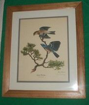 1972 LITHO PRINT ART RAY HARM LAPIS LAZULI BUNTING BLUE SONG BIRD AUDUBO... - $105.00