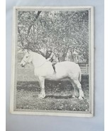 Percheron Review Rare Vintage Magazine Publication 1931 Union Stock Yards - $60.25