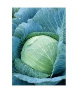 SHIP From US, 300 Seeds Stonehead Cabbage, DIY Healthy Vegetable AM - $51.99