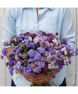 Timeless Mix Ageratum Seed / FLOWER SEEDS/ AGERATUM FLOWER SEEDS - $12.00