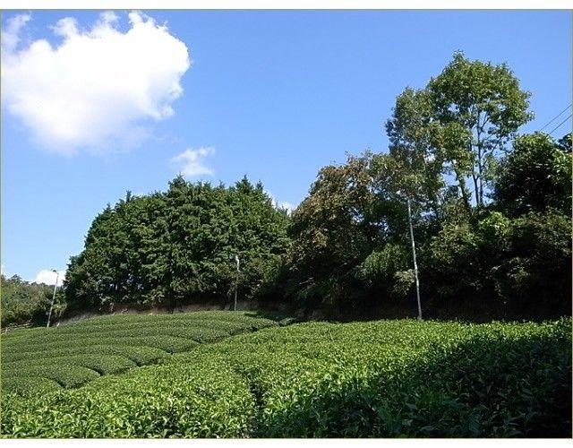 [VALUE] KYOTO Yanagi Bancha 80g (2.82oz) Japanese Green Tea