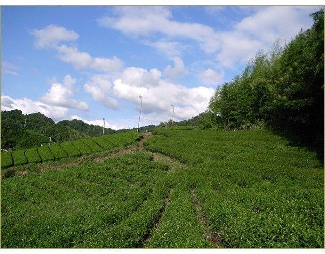 Obubu Tea : Sencha of the Earth 80g (2.82oz) Aracha green tea from Wazuka Kyoto