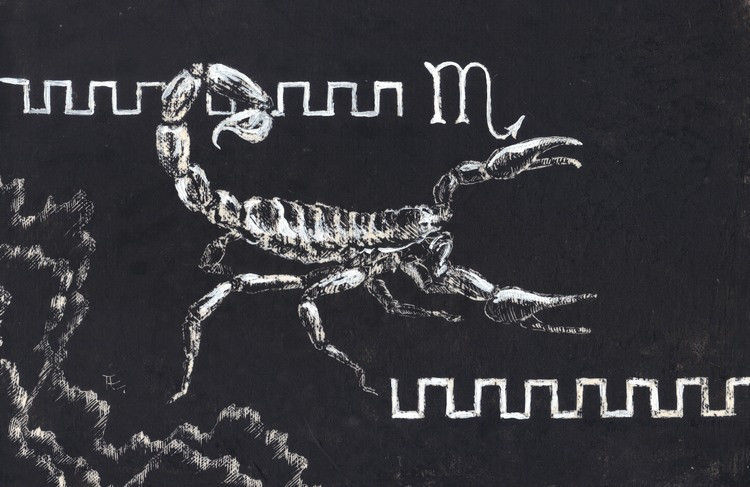 "Akimova: SCORPION , scratch paper, insect, black and white, 5.5""x8"""