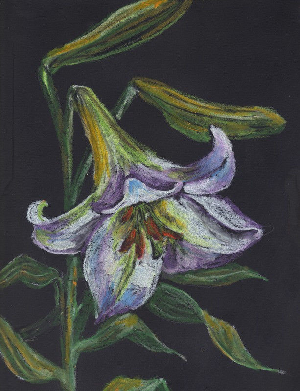 """Akimova: LILY,flower, garden, approx. size 8.5""""x11.5"""""""