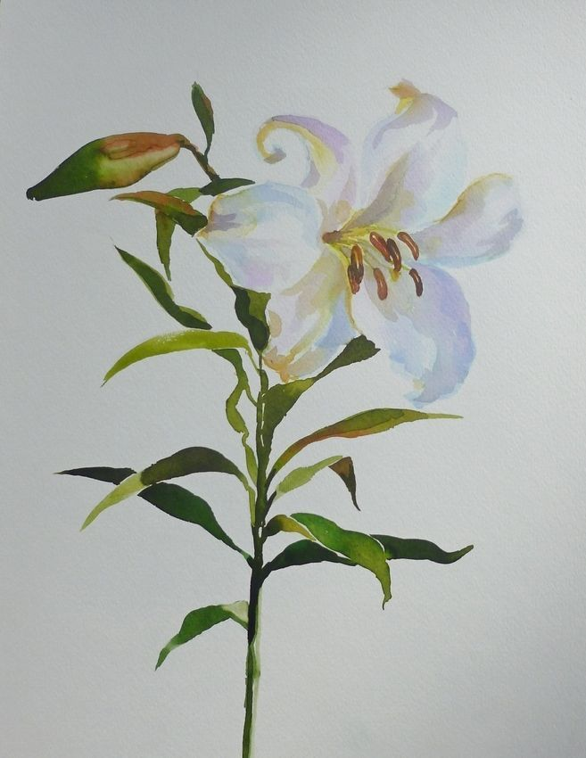 Akimova: LILY, watercolor, flower, still life