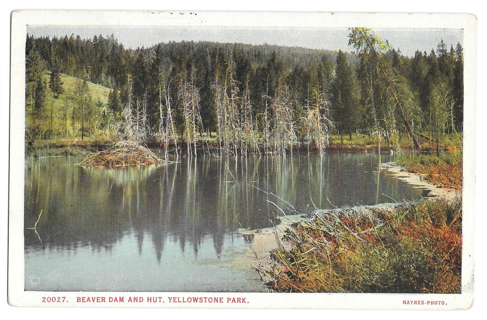 99 br 1925 1bx yellowstone beaver hut and dam