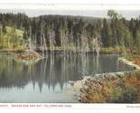 99 br 1925 1bx yellowstone beaver hut and dam thumb155 crop