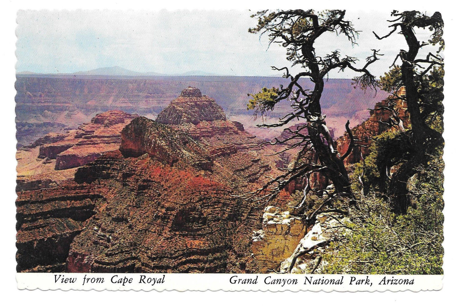 AZ Grand Canyon National Park View from Cape Royal Vtg Postcard 4X6 UPR Photo
