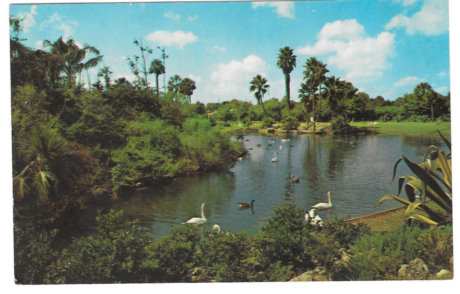 Busch Gardens Lagoon Water Birds Tampa Florida Vtg Beckett Postcard