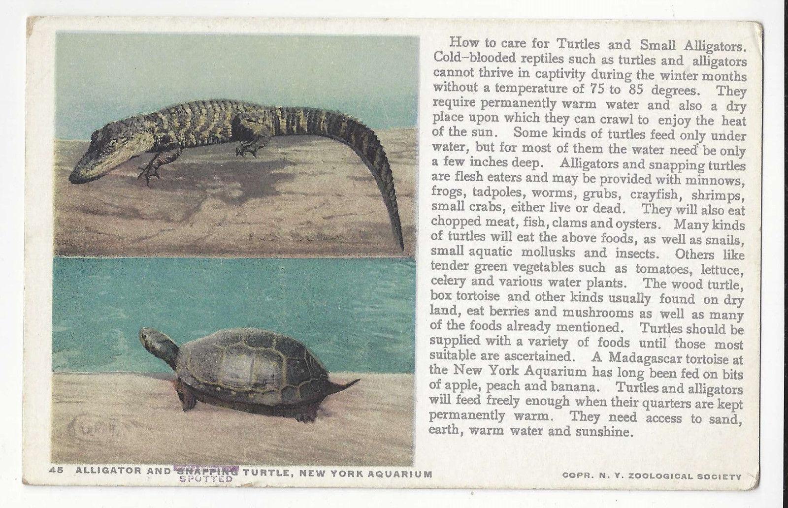 Alligator Snapping Turtle New York Aquarium Vtg Zoological Society Postcard NY
