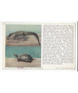 Alligator Snapping Turtle New York Aquarium Vtg Zoological Society Postc... - $5.69