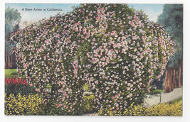California Rose Arbor Julius J Hecht Quality Cards No. 533 Vintage Postcard - $6.64