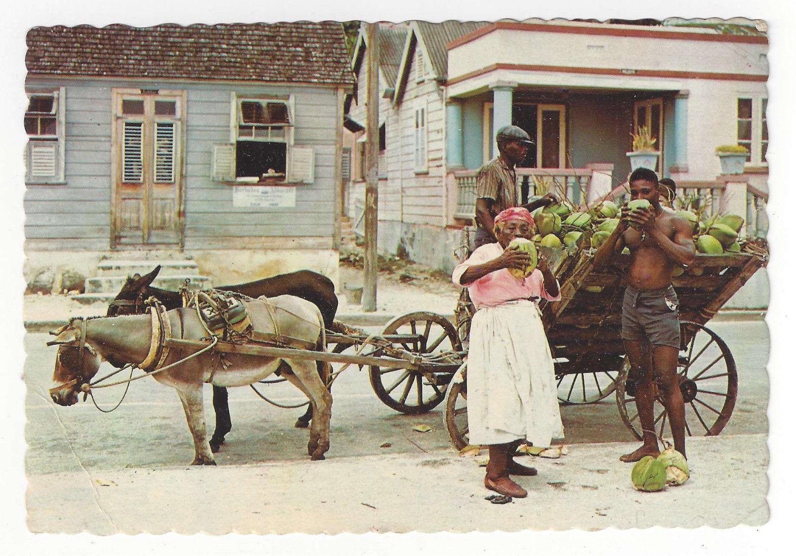 Caribbean Coconut Vendors Donkey Cart Vtg 1965 Postcard 4X6