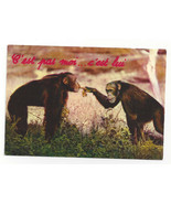 Chimpanzees Humor It's not me It's him Vtg Continental Postcard 4X6 - $4.74