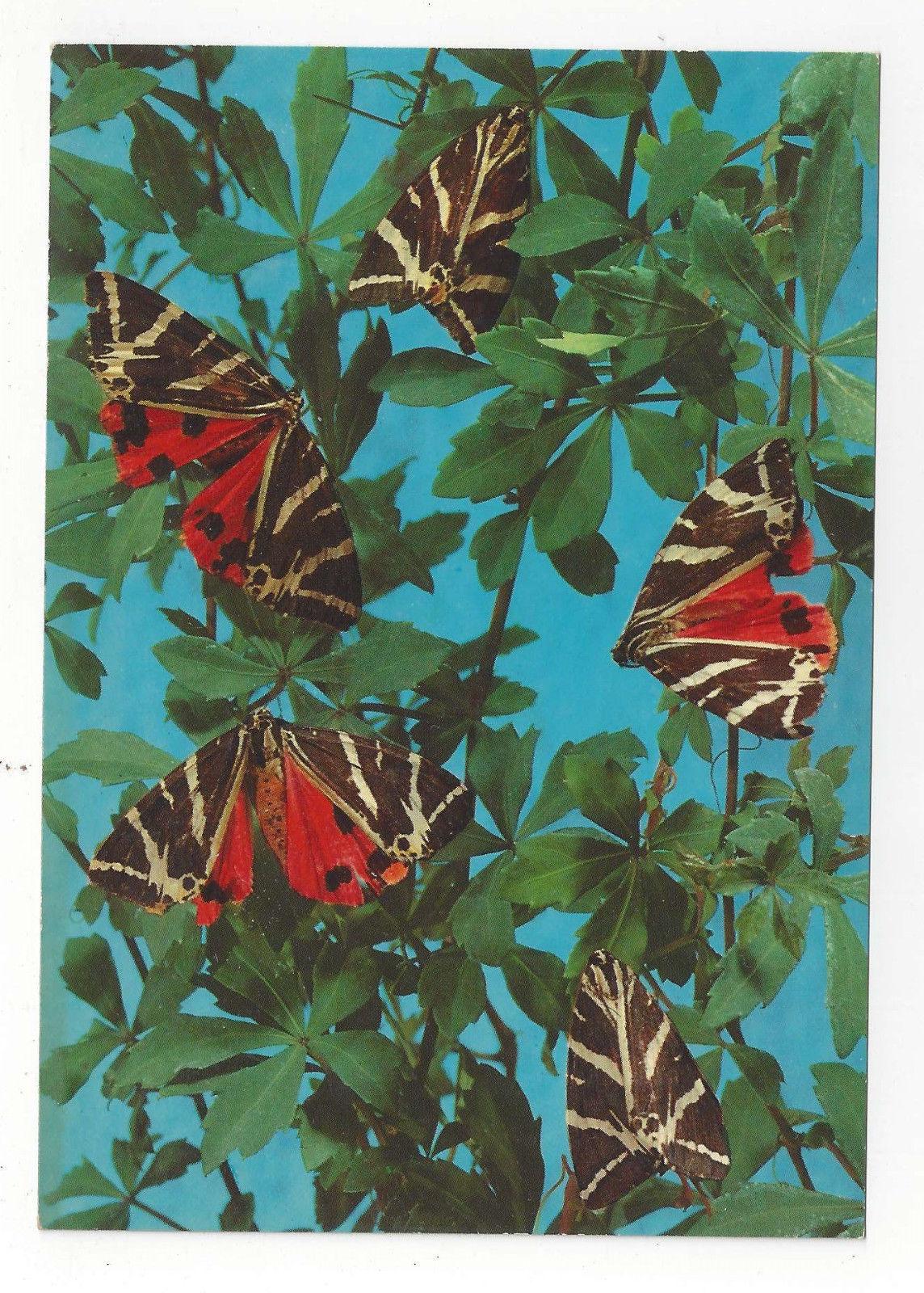 Butterfly Greece Rhodes Valley of the Butterflies Papillons Vtg 4X6 Postcard