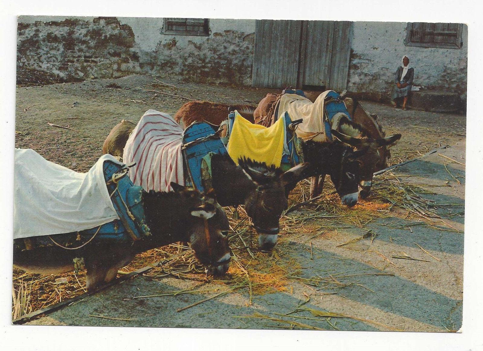 Greece Donkey Riding Ellas Vtg Postcard 4X6