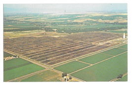 Greeley CO Monfort Gilcrest Cattle Feedlot Aerial View Vtg Lew Dakan Pos... - $5.69