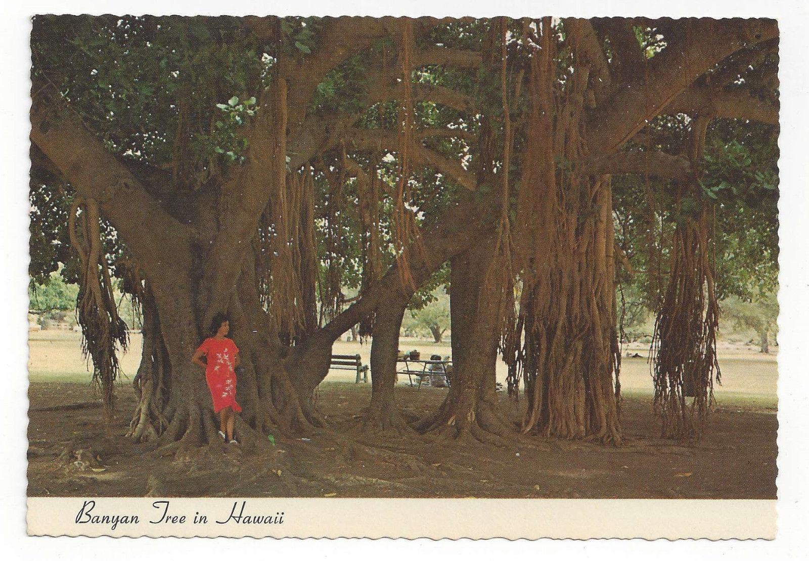Hawaii Banyan Tree Vtg Chrome Postcard 4X6 Ted Birckhead Photo