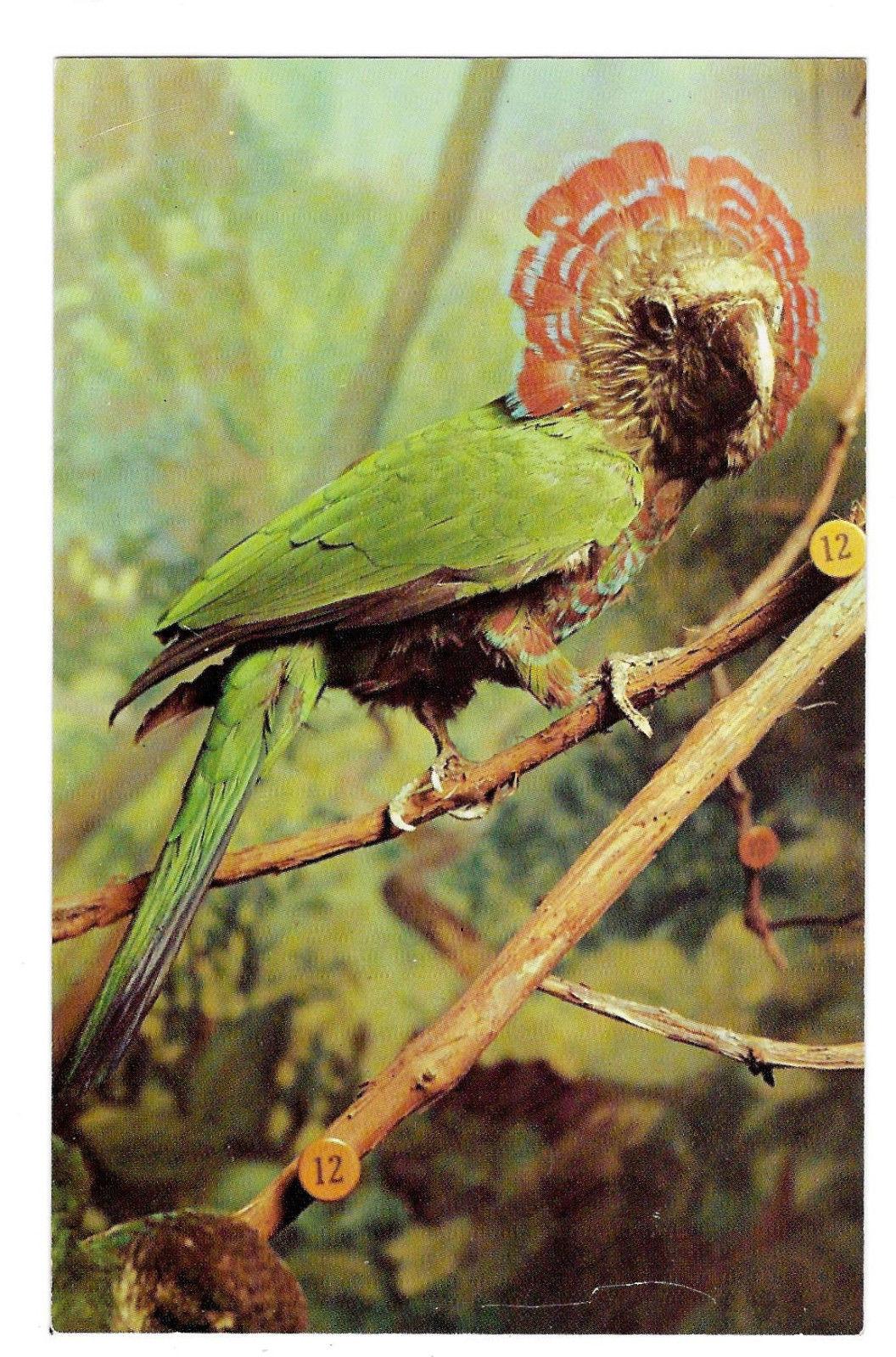 Hawk Headed Parrot Philadelphia Academy Natural Science Museum Exhibit Postcard