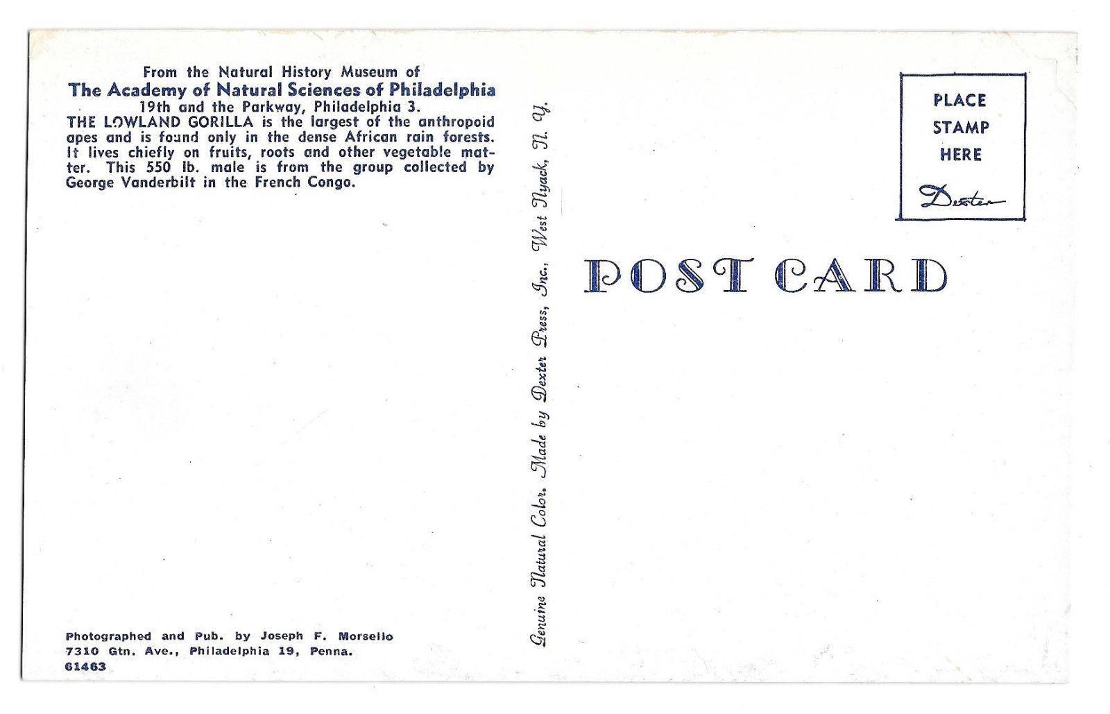 Lowland Gorilla Philadelphia Academy Natural Science Museum Exhibit Postcard