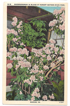 VA Marion Rhododendrons in Bloom Hungry Mother State Park Vtg Linen Post... - $6.45